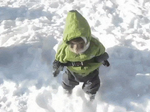 Look At This Adorable Monkey Hop Around In A Snow Suit!