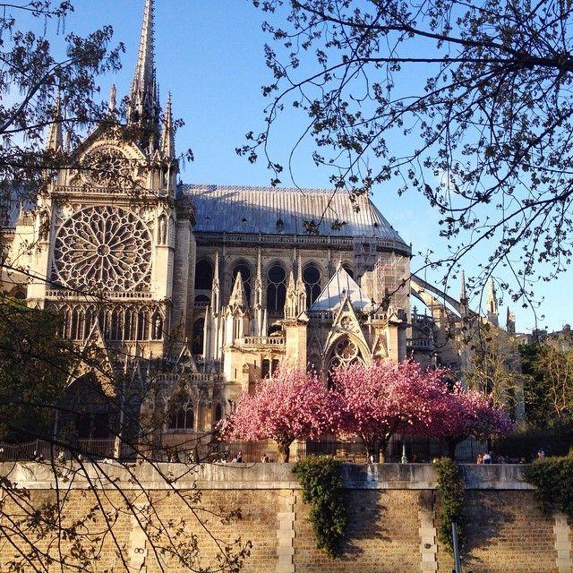 Notre Dame - Copyright Carla Coulson