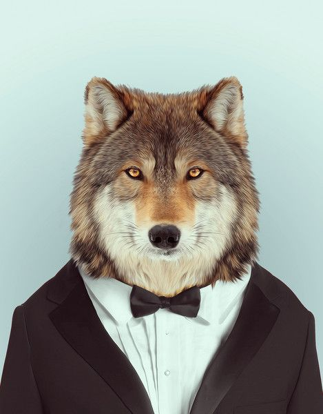 Zoo Portraits by artist Yago Partal combine photography with fashion illustration where Partal's photos of animals are dressed up in human clothing, their dabbe