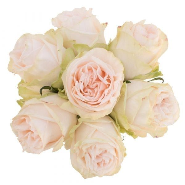 Garden Spirit Rose Rose Wholesale Flowers Flowers