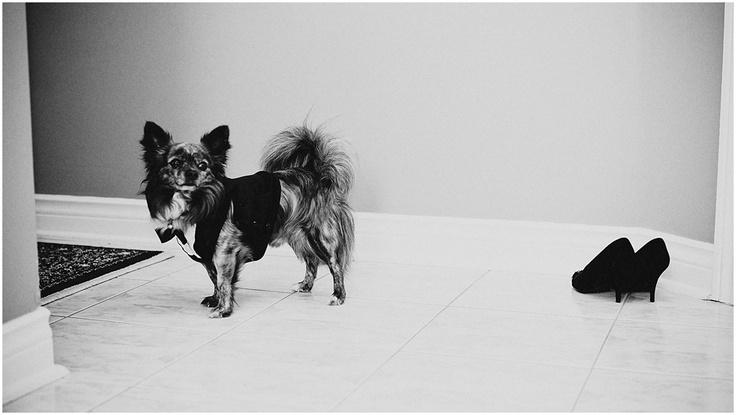 Toronto Wedding Photographer - Tuxedo Dog - www.swiegotstudios.com