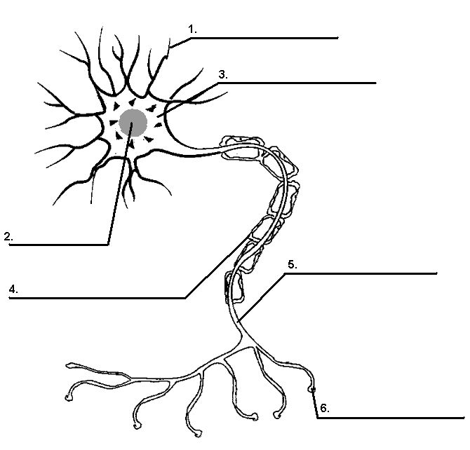 neuron coloring page