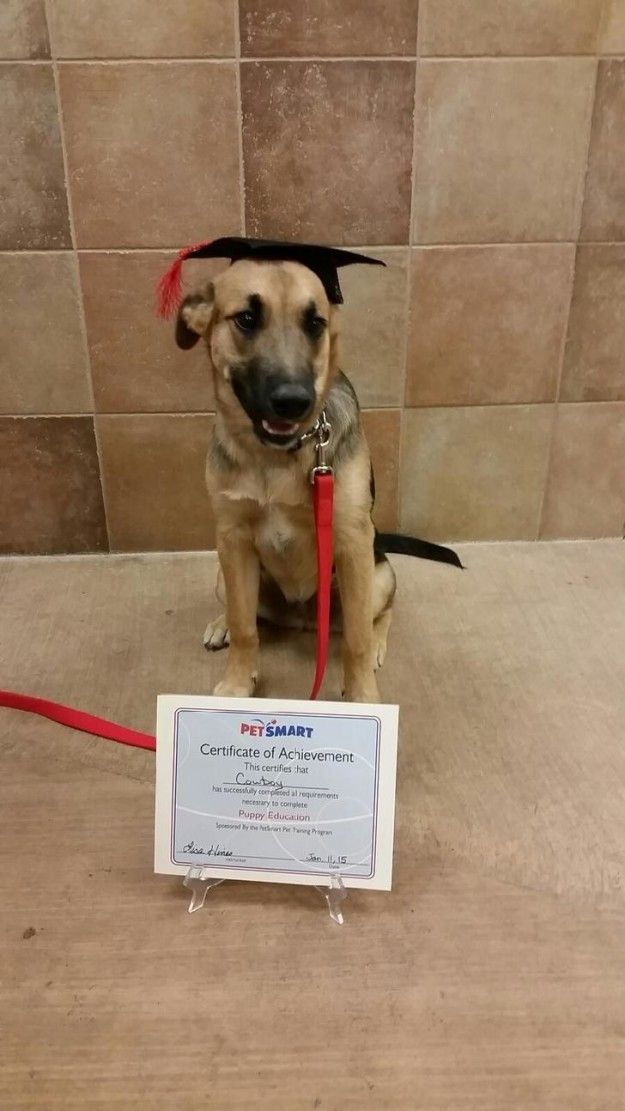 Cowboy, who is just such a good boy. | 22 Proud Pups Who Finally Graduated From…