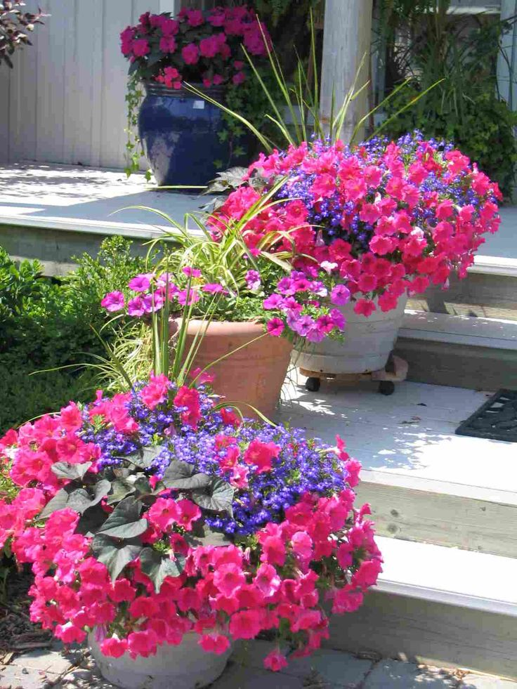 Petunias and lobelia (with a begonia or two) on a front step at prettywww.douggre...