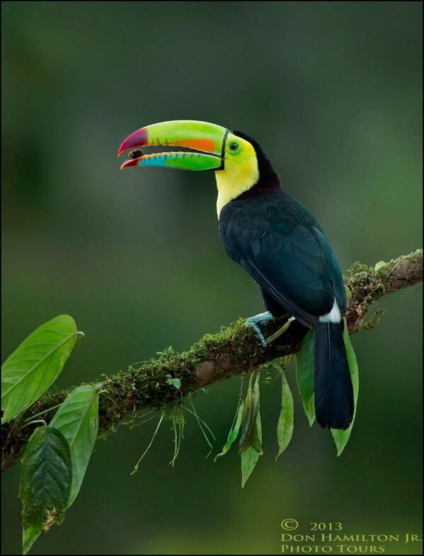 1000 images about toucan sam on pinterest party favors for Toucan sam