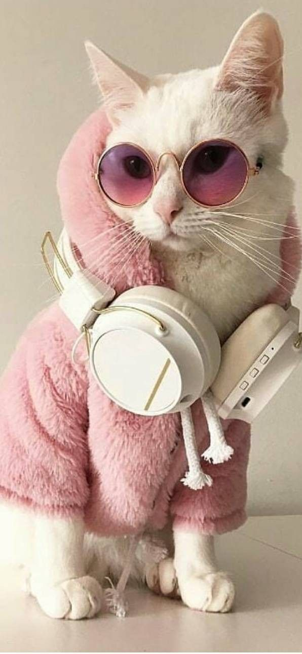 Hd Images Of Animals Birds Wallpapers Wallpaper Hd Hdwallpaper Amazing Instagram Pinterest Wallpaper Emoji Phone In 2020 Cat Wallpaper Animals Cats
