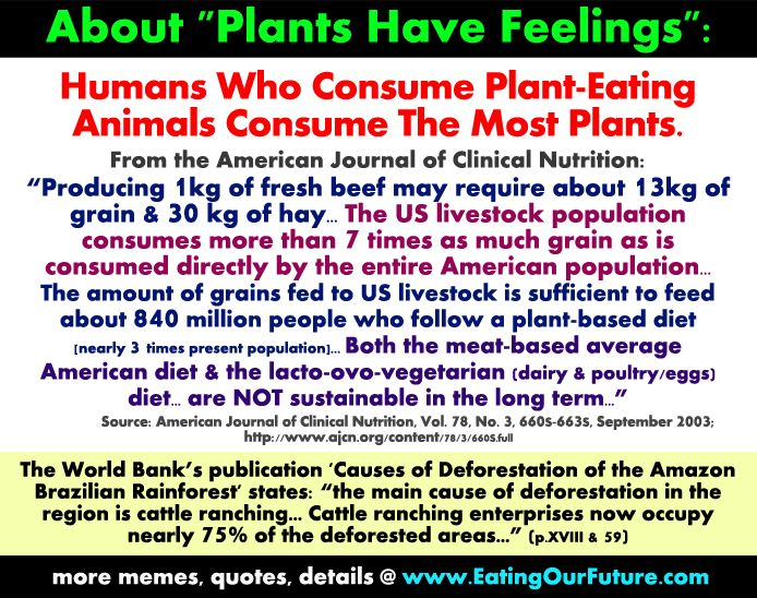 Best Top Good Vegan Vegetarian Facts Quotes Memes Reply Rebut Refute Claim Plants Have Feelings Vegetarians Vegans Kill Hurt Plants But Meat Eaters Kill Hurt Many More as Livestock Farm Animals Eat Most Bulk Crops Facts Figures Studies Exposed