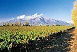 メルシャン フロンテラ ワインフレッシュサーバー カベルネソーヴィニヨン バッグインボックス 3000ml [チリ/赤ワイン/辛口/ミディアムボディ/1本] #Chile #チリ