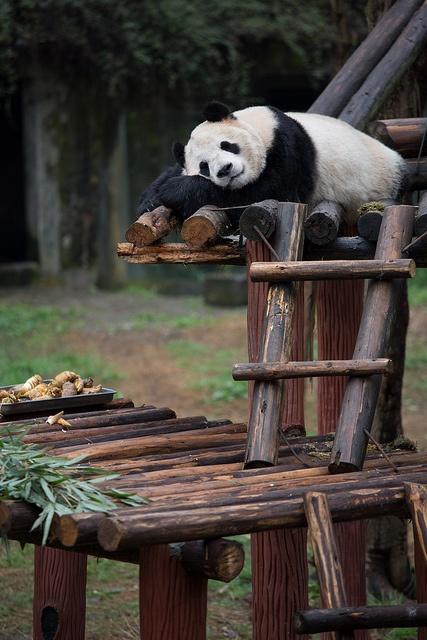 Panda by Lauri Väin, via Flickr