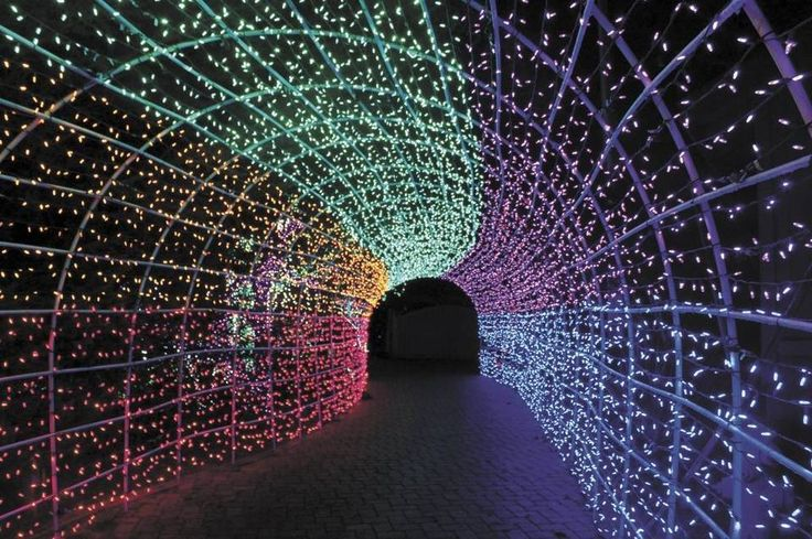 The Cambria Christmas Market's famous tunnel of lights.