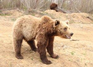sanctuary-bear