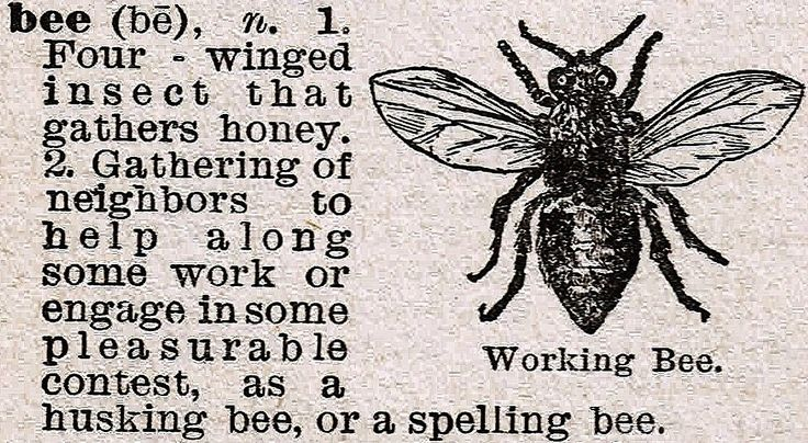 Vintage Bee Dictionary Definition via http://knickoftimeinteriors.blogspot.com/