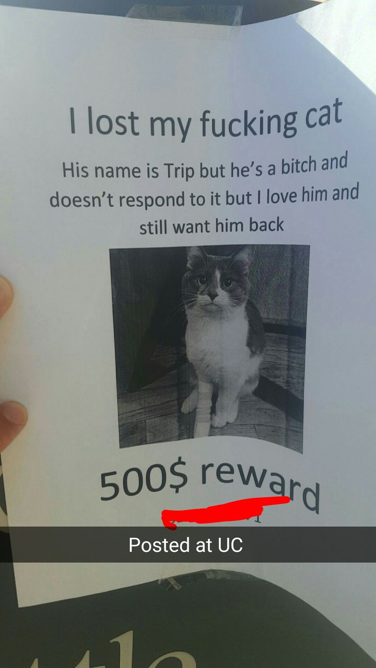 Someone lost their cat on campus - more at http://www.thelolempire.com