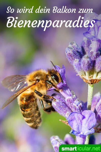 Blumen für den Bienenbalkon: So wird dein Heim zum Bienenparadies