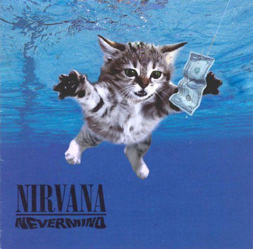 Cats Recreate Famous Album Covers (33 Pics)