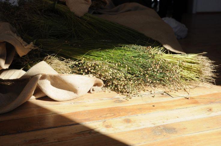 Il ino seminato in Val di Pejo e Rabbi