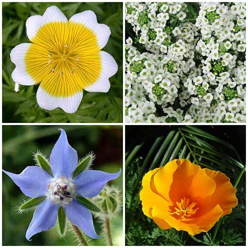 8 Gorgeous Plants That Self-Seed Year After Year