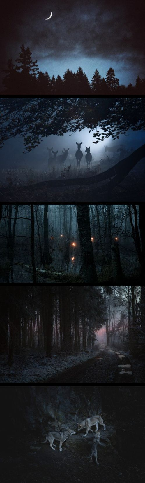 The woods.