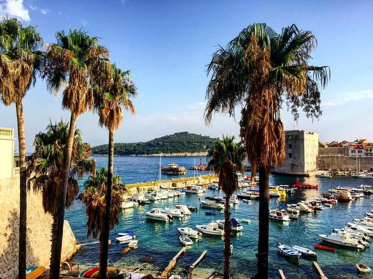 One of my favourite views of Dubrovnik. Palm trees galore!  📷 @thebeautyofdalmatia   | Obsess, collect and discover hidden treasures at Uppermoda | Independent fashion from Croatia | Free Shipping in Australia  ❤️ Repin to your own inspiration board