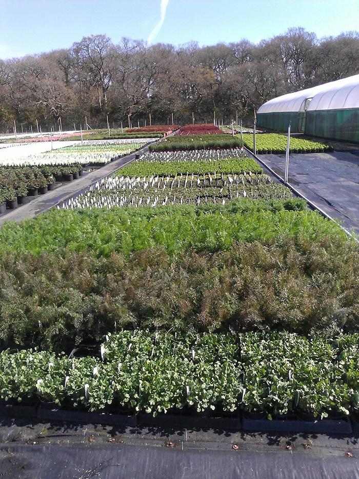 Perfumery plants for our pop up shop and garden at RHS Chelsea Flower Show