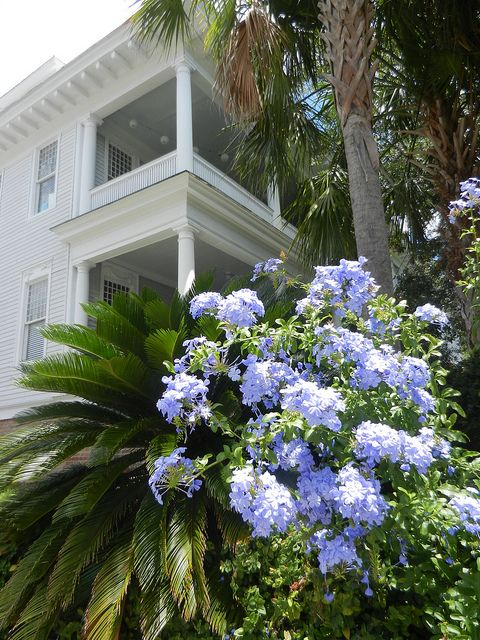 17 Best Ideas About Southern Architecture On Pinterest Southern Homes Plantation Homes And