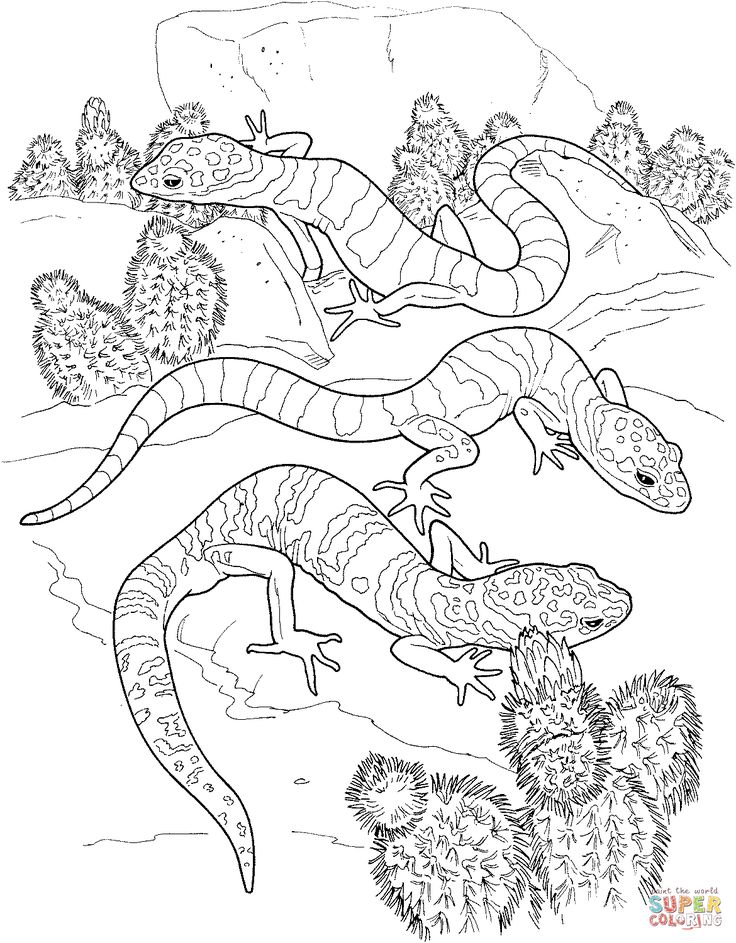 78 best patterns images on pinterest coloring pages to for Gecko lizard coloring pages
