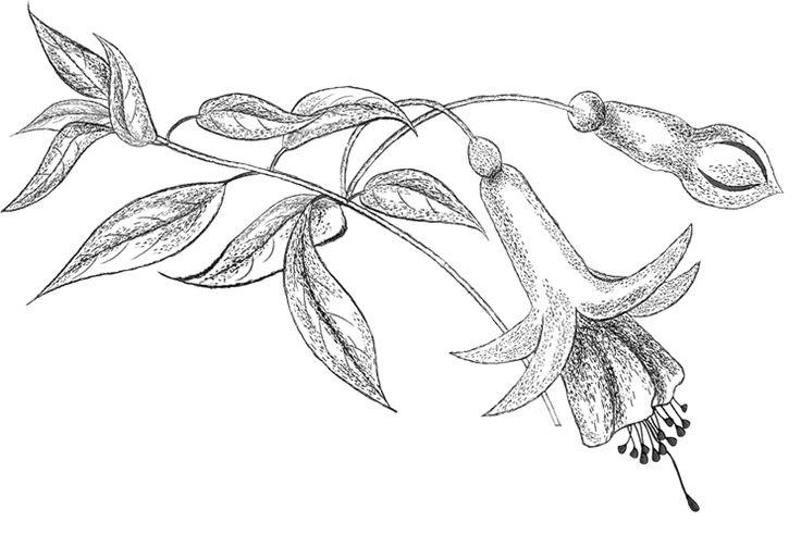 fuchsia pencil png