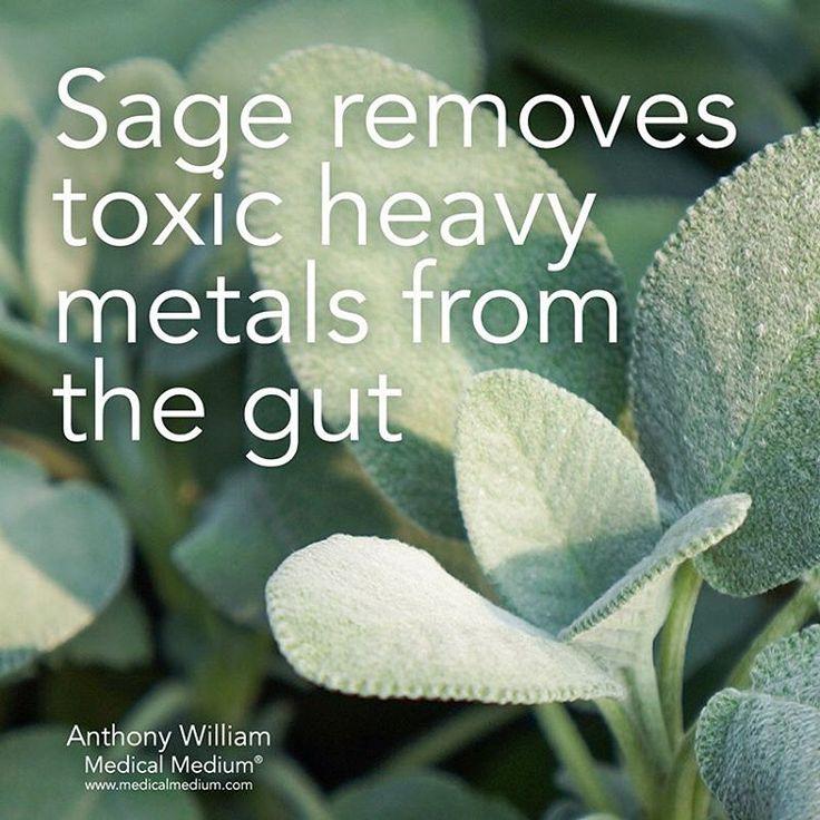 5,487 vind-ik-leuks, 31 reacties – Medical Medium® (@medicalmedium) op Instagram: 'Sage removes toxic heavy metals from the gut  Learn more about the healing powers of sage in Life-…'Su McGe