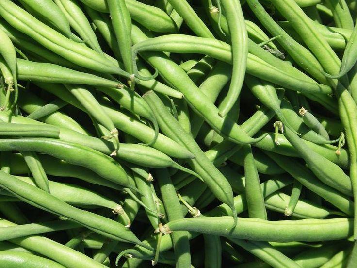 Aprenda a plantar vagem de forma fácil! #plantar #horta #vagem #legumes