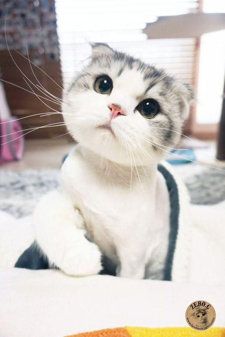 오늘의유머 - 고양이 코카콜라 제로입니다 10