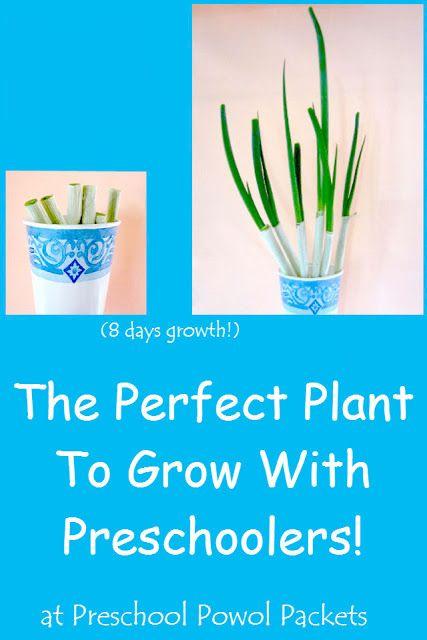 231 best gardening ideas images on pinterest spring for The perfect vegetable garden