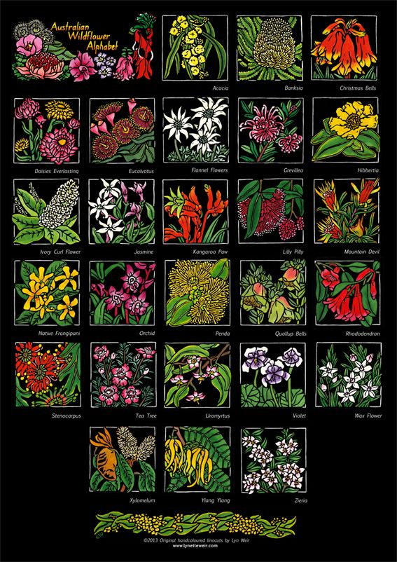 Australian Wildflower Alphabet - Poster http://soulsongart.com/2013/11/29/the-process-of-developing-my-australian-wildflower-wildlife-alphabets/ Limited Edition Handcoloured Linocuts by Lynette Weir © copyright Lynette Weir