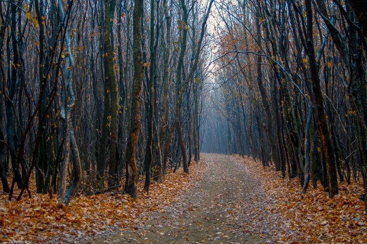 Hoia Baciu Forest in Romania - It's paranormal :-)