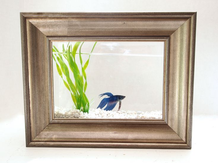 37 best images about fish tank ideas on pinterest steve for Fish tank glue