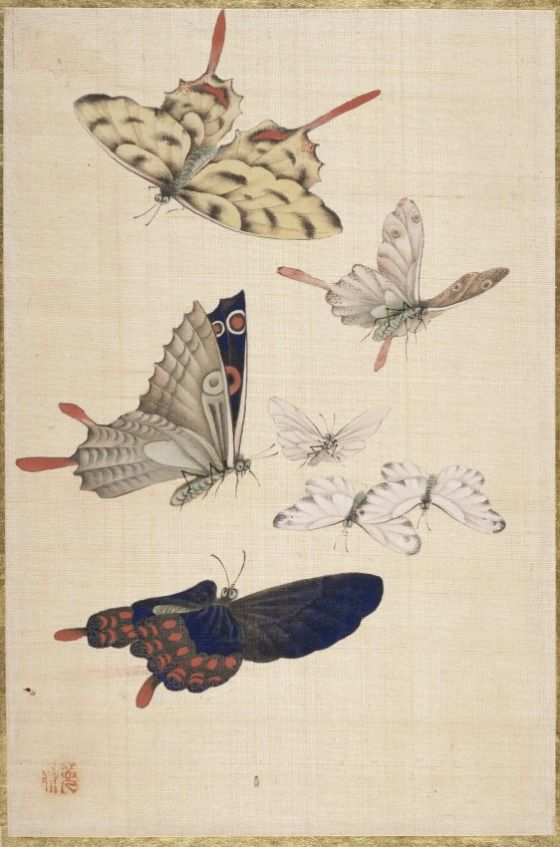 """From the book """"Pictures of Flowers and Birds"""" by Okamoto Shūki (Japan, 1807-1862) - Japan, 19th century - Album of 66 leaves; ink and color on silk"""