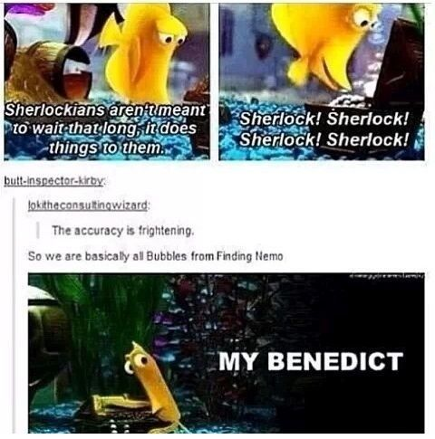 Sherlockians: We are all the bubbles from Finding Nemo... ← Oh, my Benedict!