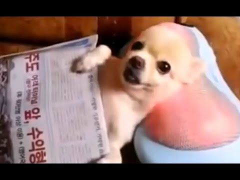 "+18 ONLY!! BEST FUNNY ANIMALS COMPILATION 2014 ""TOP 100 of short tricks with animals"". - YouTube"