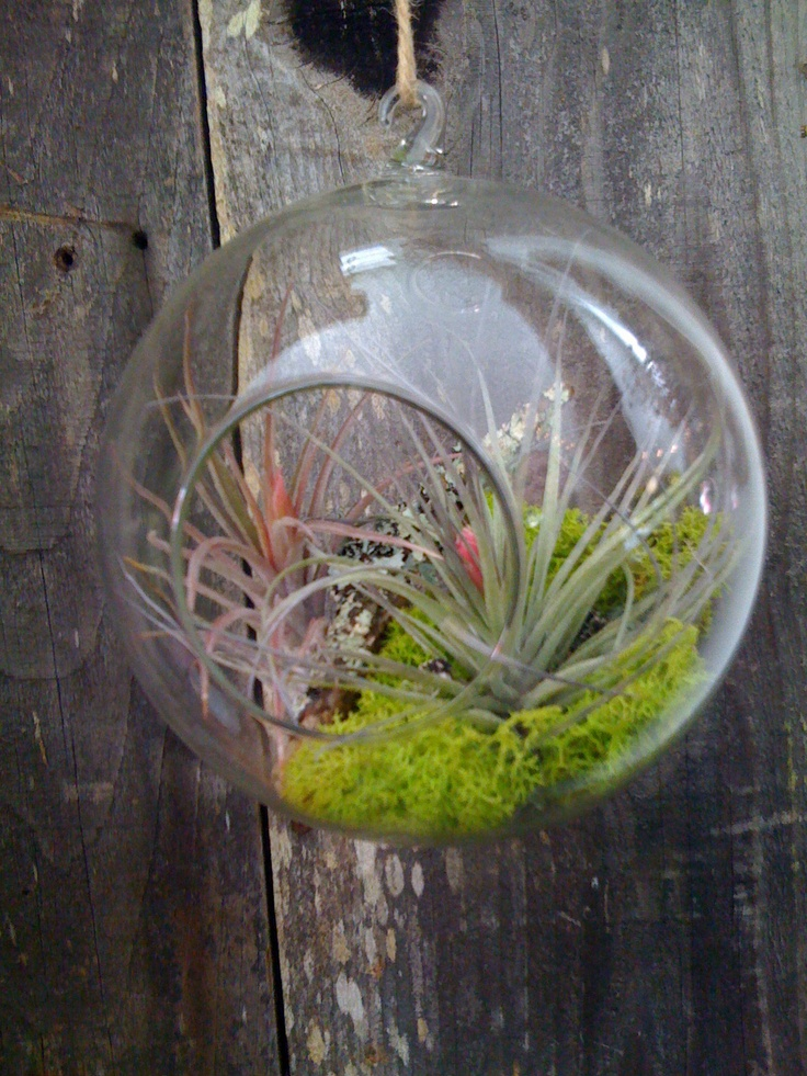 I love small glass planters and terrariums. Just something cool about it.