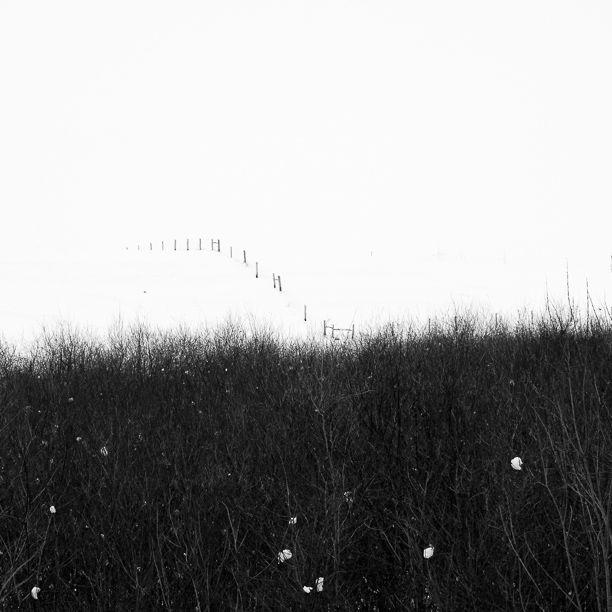 by Attila Simon www.attilasimon.com #landscape #winter #fence #nature #blackandwhite
