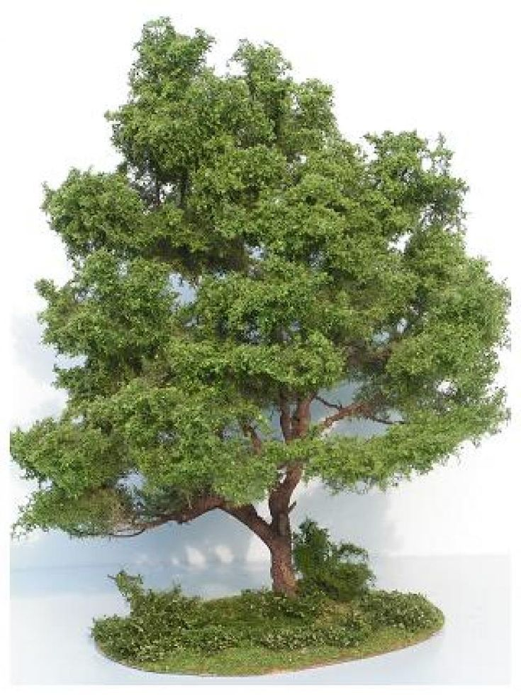 realistische(?)bomen/boompjes maken