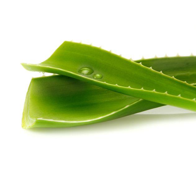Como fazer seu próprio gel de Aloe Vera