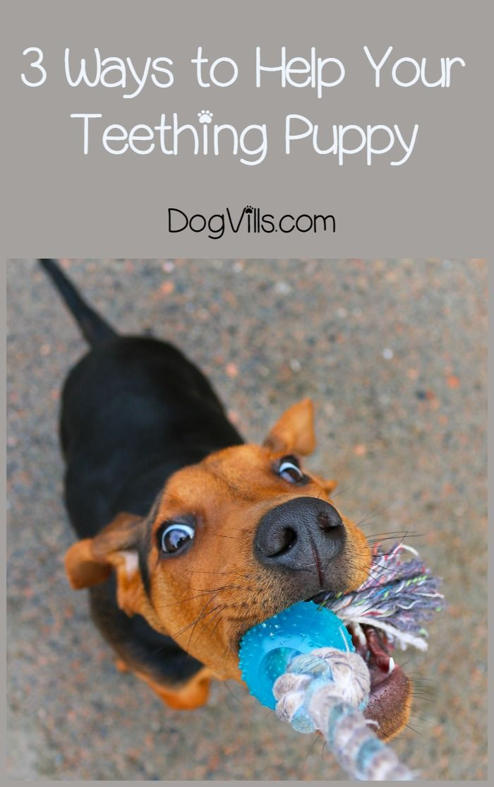 Teething Puppies – Soothe Their Mouths and Save Your House