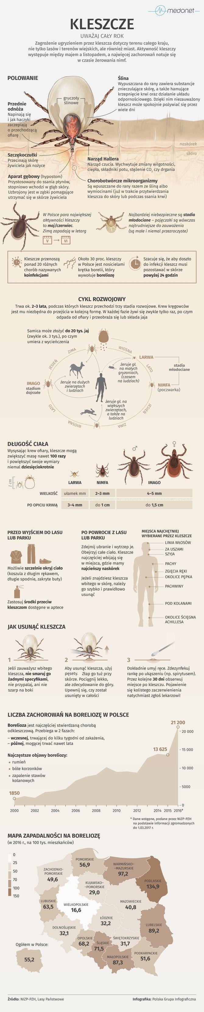 Wraz z nadejściem cieplejszych dni do życia budzą się kleszcze. Te nieduże pajęczaki żerują głównie na kręgowcach i od marca do listopada stanowią poważne zagrożenie. Mimo że samo ugryzienie kleszcza jest bezbolesne to może się ono skończyć kleszczowym zapaleniem mózgu czy boreliozą. Sprawdź, jak się przed nimi chronić, gdzie gryzą najczęściej i jak bezpiecznie pozbyć się intruza.