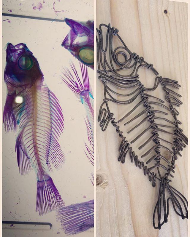 骨格標本のブースに魅せられて、ワイヤーで骨を作るの巻。  #透明骨格標本 #ヘビ、カエル、フグ、ネズミも居たよ #骨が綺麗 #トラストシティプラザ #ワイヤークラフト #ワイヤーアート