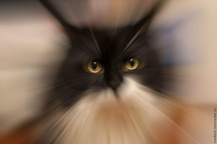 Купить Мой кооооотииик. )) - бежевый, кот, янтарные глаза, темно-бежевый, светло-серый