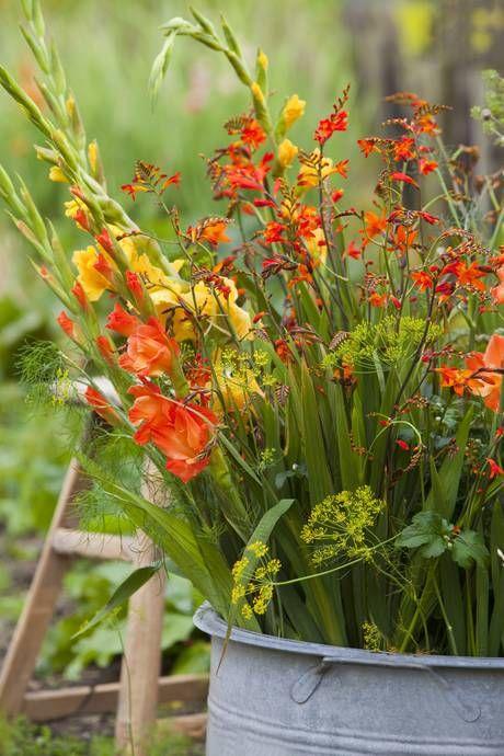 10 Romantischer Sommer in Orangtönen mit großbluetigen Gladiolen und Montbretie