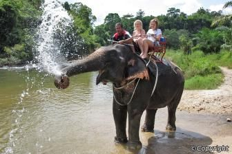 Phuket elephant tour!!! Phang Nga Nature Tour - Bamboo Rafting, Canoeing, Elephant Trekking and Bathing in Phang Nga
