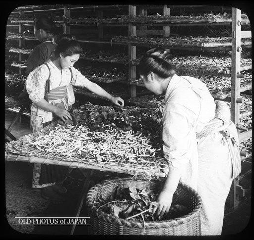 Two Japanese Women Feeding Silk Worms