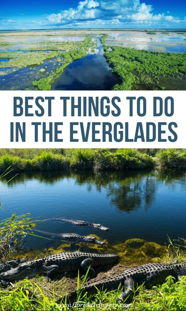 11 Best Things To Do In Everglades National Park North America Travel Destinations Travel Usa National Parks