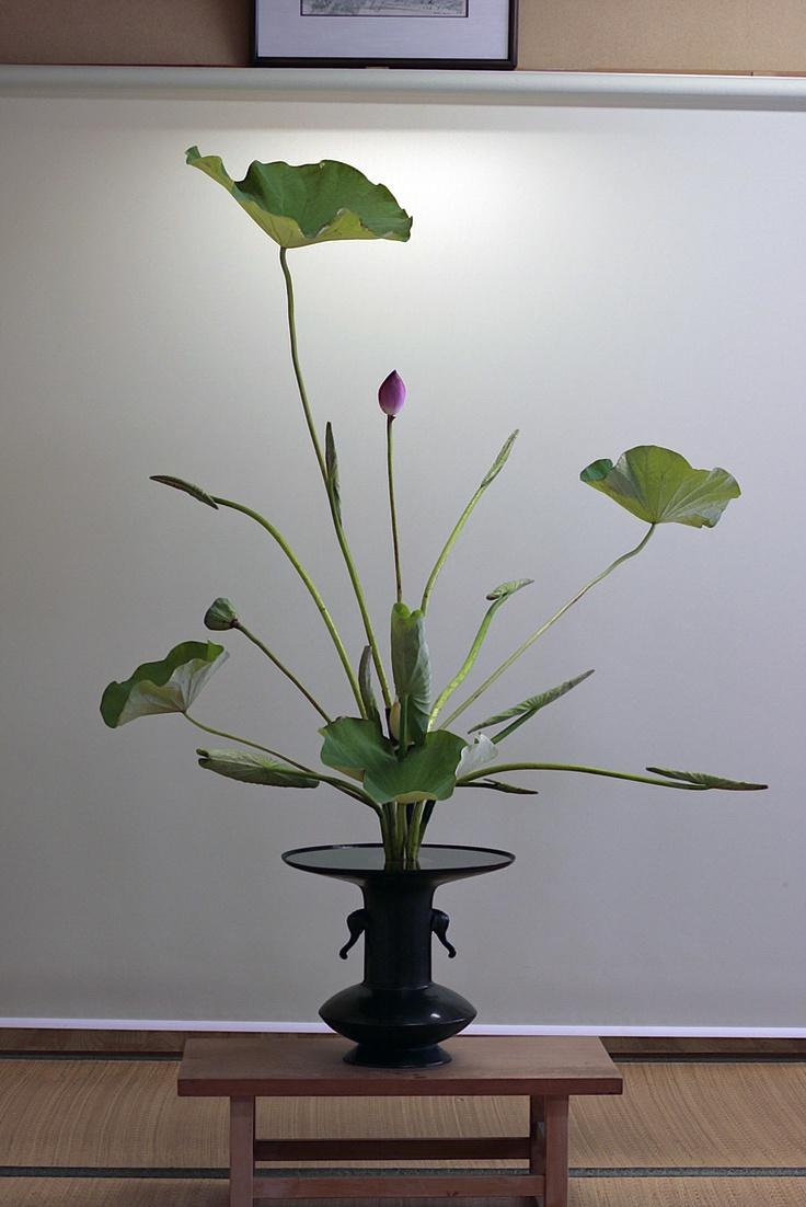 Lotus rikka rather basic ikebana pinterest